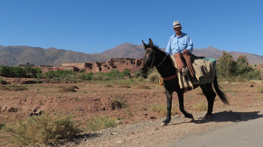 uomo sul mulo Telouet