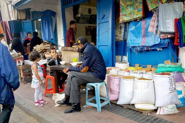 gatti in Marocco